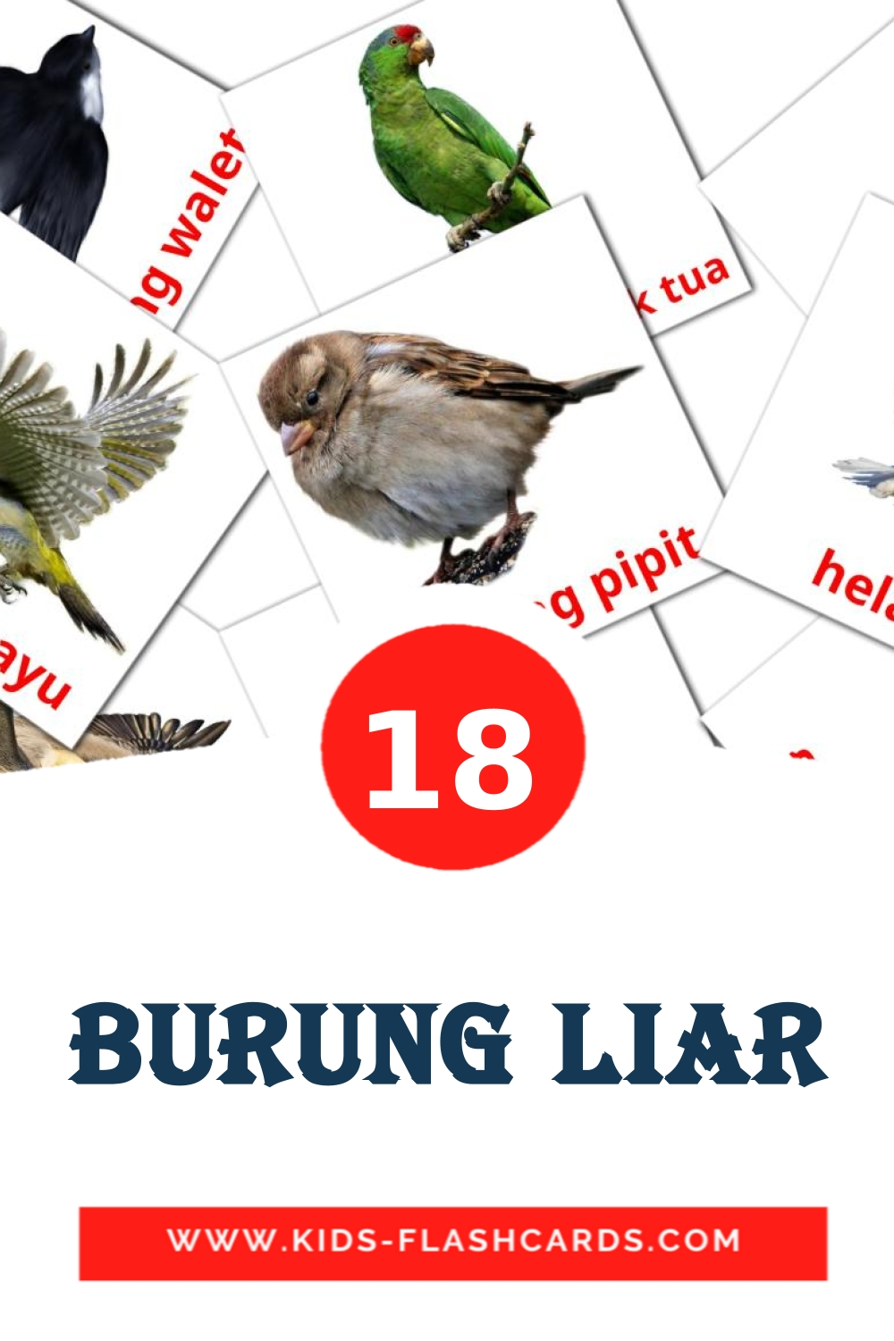18 burung liar Picture Cards for Kindergarden in malay