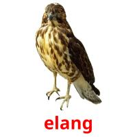 elang picture flashcards