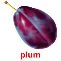 plum picture flashcards