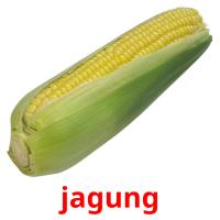 jagung picture flashcards