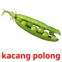 kacang polong picture flashcards