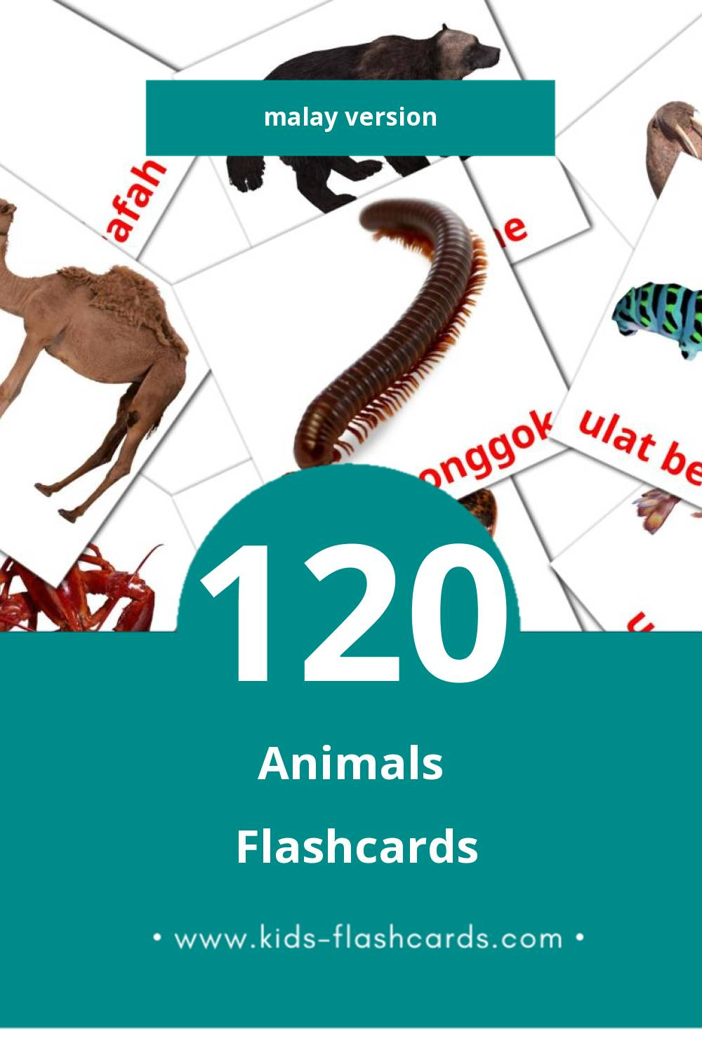 Visual Hidupan  Flashcards for Toddlers (98 cards in Malay)