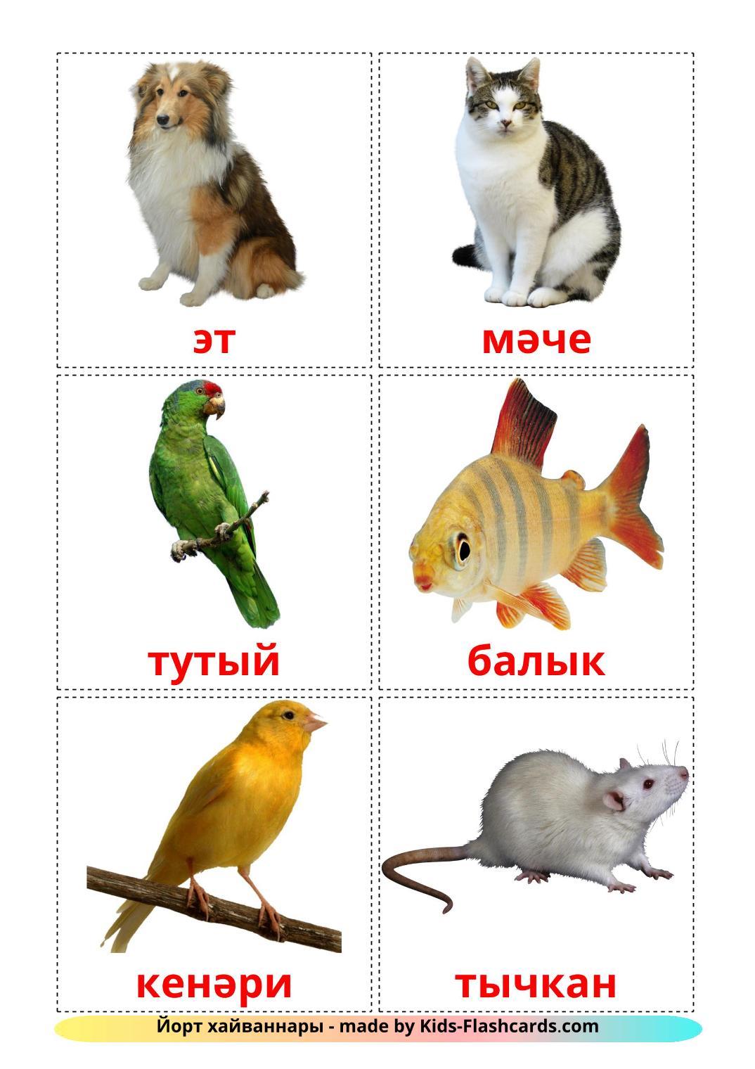 Домашние животные - 10 Карточек Домана на татарском