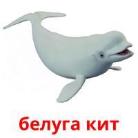 белуга кит карточки энциклопедических знаний