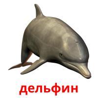 дельфин picture flashcards