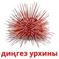 диңгез урхины карточки энциклопедических знаний