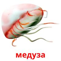 медуза picture flashcards