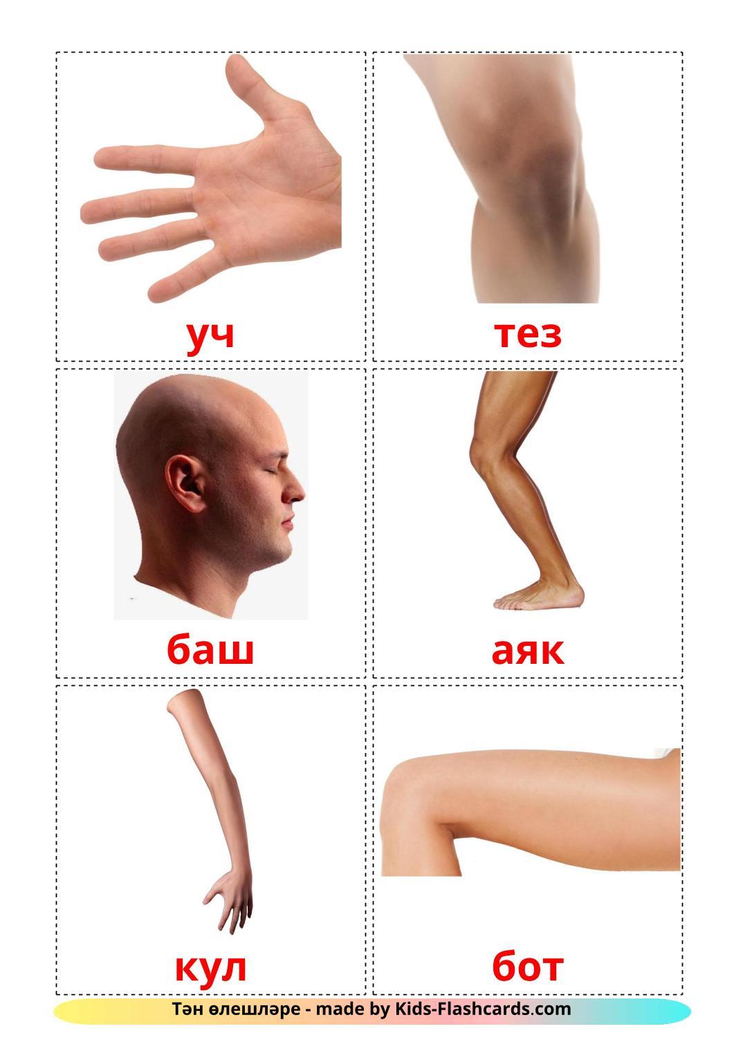 Body Parts - 26 Free Printable tatar Flashcards