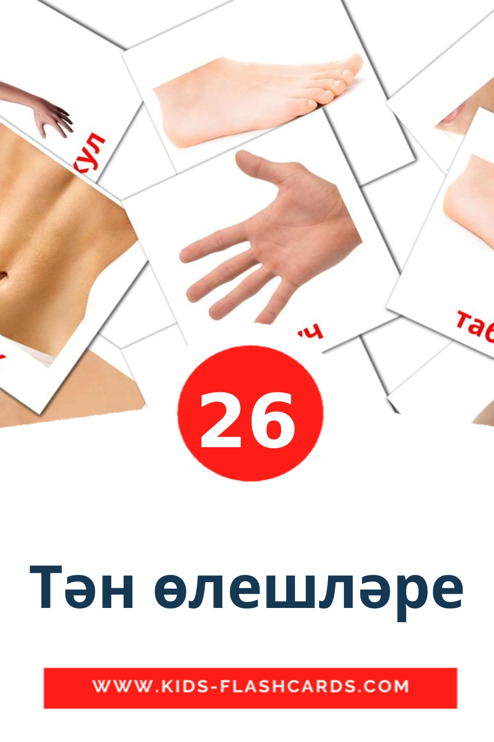 26 Тән өлешләре Picture Cards for Kindergarden in tatar