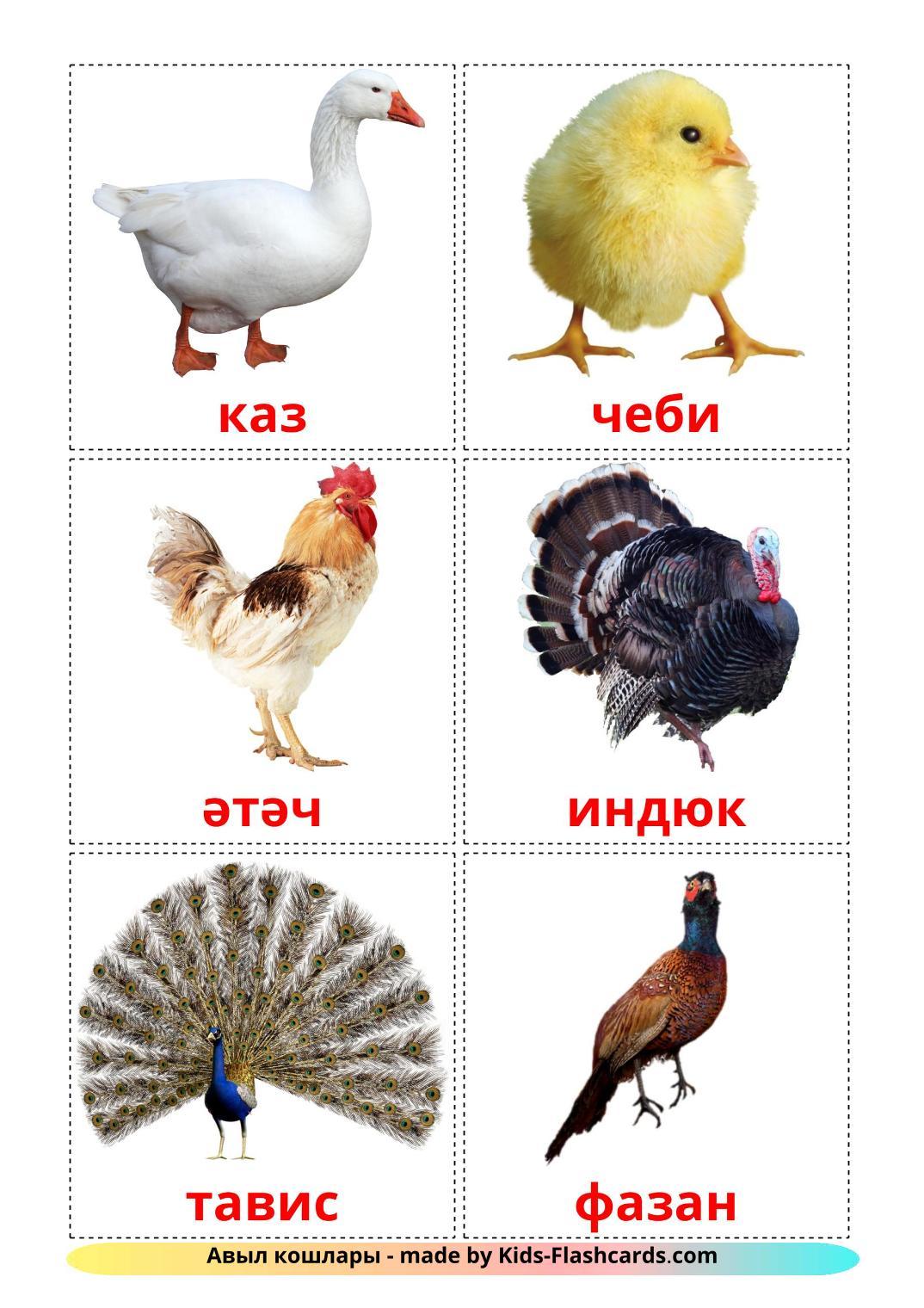 Farm birds - 11 Free Printable tatar Flashcards
