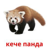 кече панда карточки энциклопедических знаний
