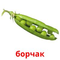 борчак picture flashcards