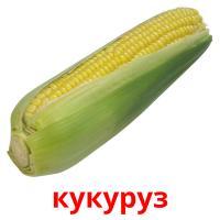 кукуруз picture flashcards