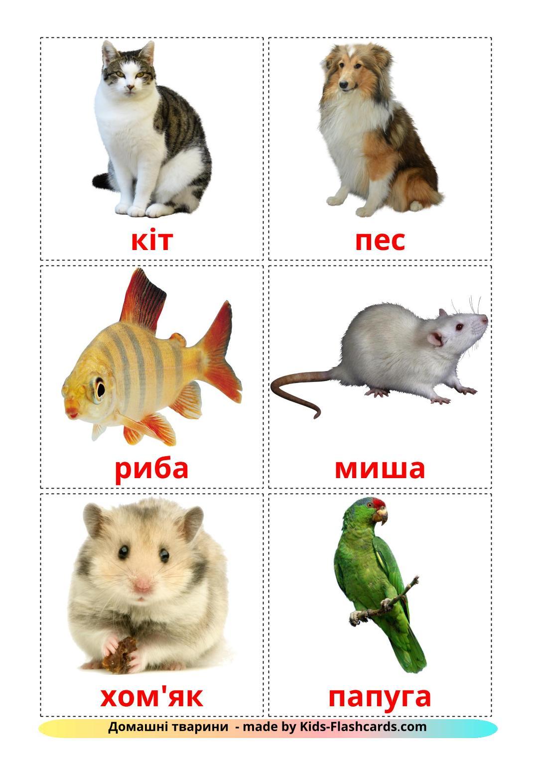 Domestic animals - 10 Free Printable ukrainian Flashcards