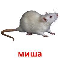 миша picture flashcards