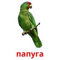 папуга picture flashcards