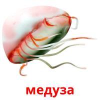 медуза карточки энциклопедических знаний