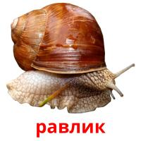 равлик picture flashcards