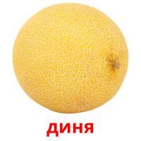 диня picture flashcards