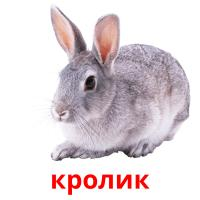 кролик picture flashcards