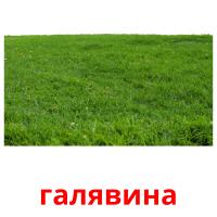 галявина picture flashcards