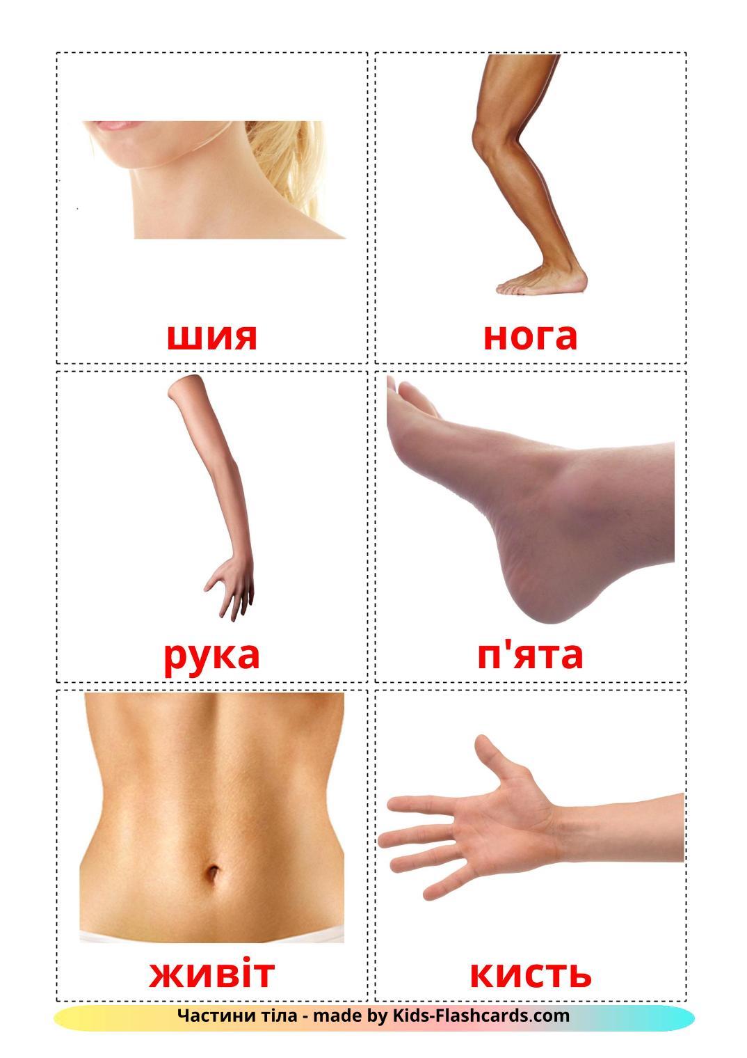 Body Parts - 26 Free Printable ukrainian Flashcards