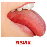 язик picture flashcards