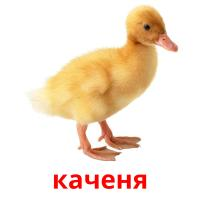 каченя picture flashcards