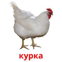 курка picture flashcards