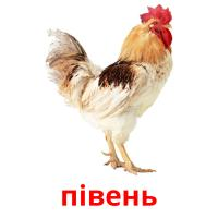 півень picture flashcards