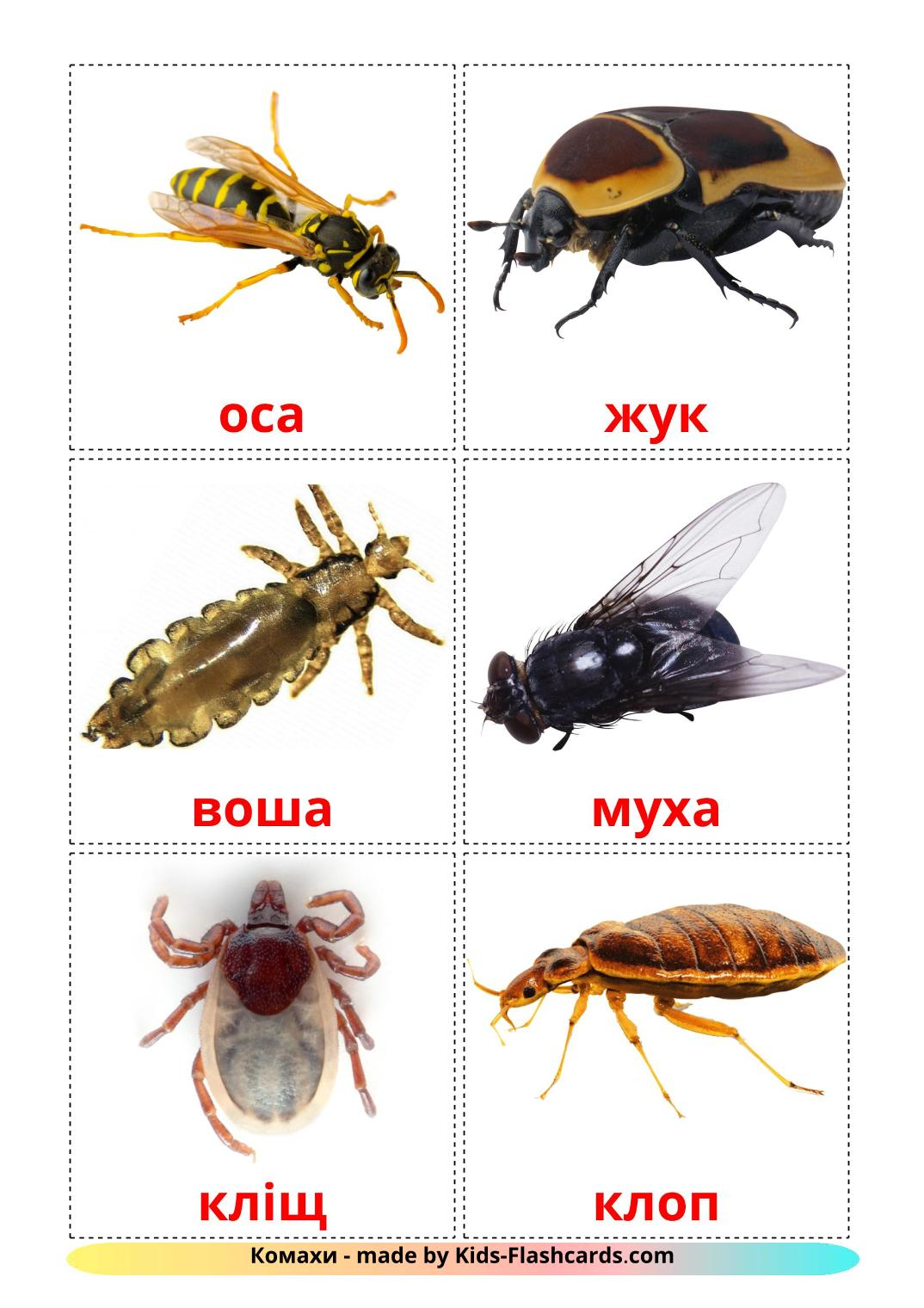 Insects - 23 Free Printable ukrainian Flashcards