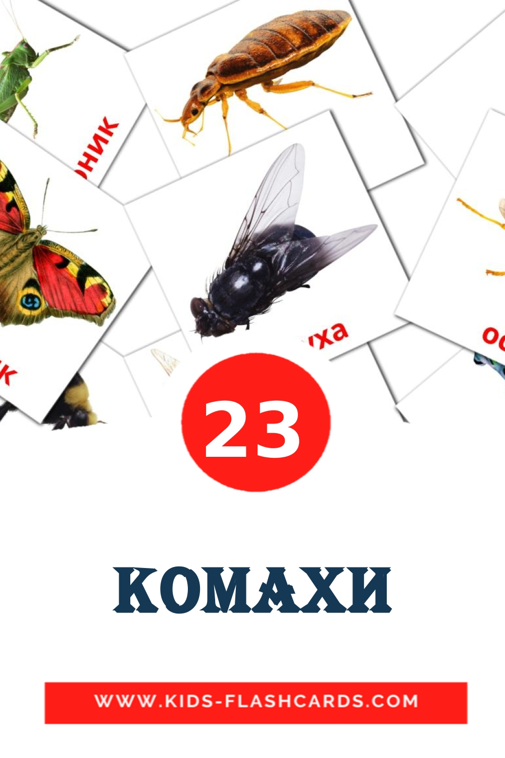 23 Комахи Picture Cards for Kindergarden in ukrainian
