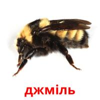 джміль picture flashcards