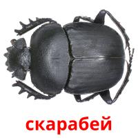 скарабей picture flashcards