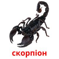 скорпіон picture flashcards