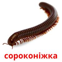 сороконіжка picture flashcards