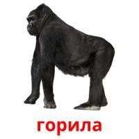 горила picture flashcards