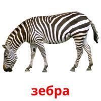 зебра picture flashcards