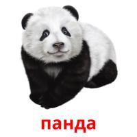 панда picture flashcards