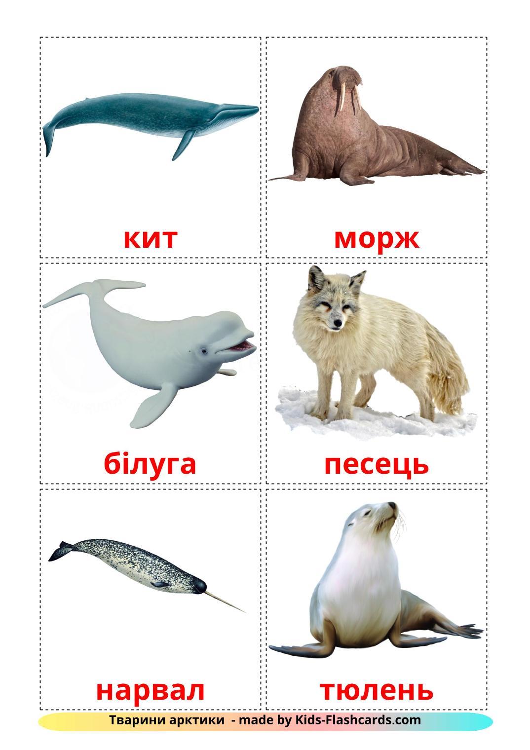 Arctic animals - 14 Free Printable ukrainian Flashcards