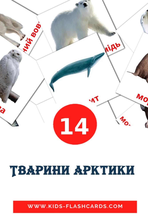14 Тварини арктики  Picture Cards for Kindergarden in ukrainian
