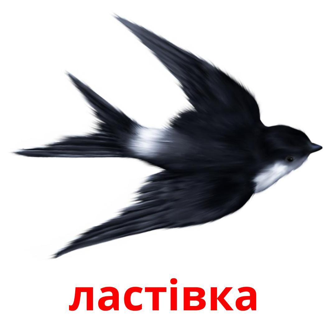 17 бесплатных карточек Дикие птицы для детей на украинском (PDF файлы)
