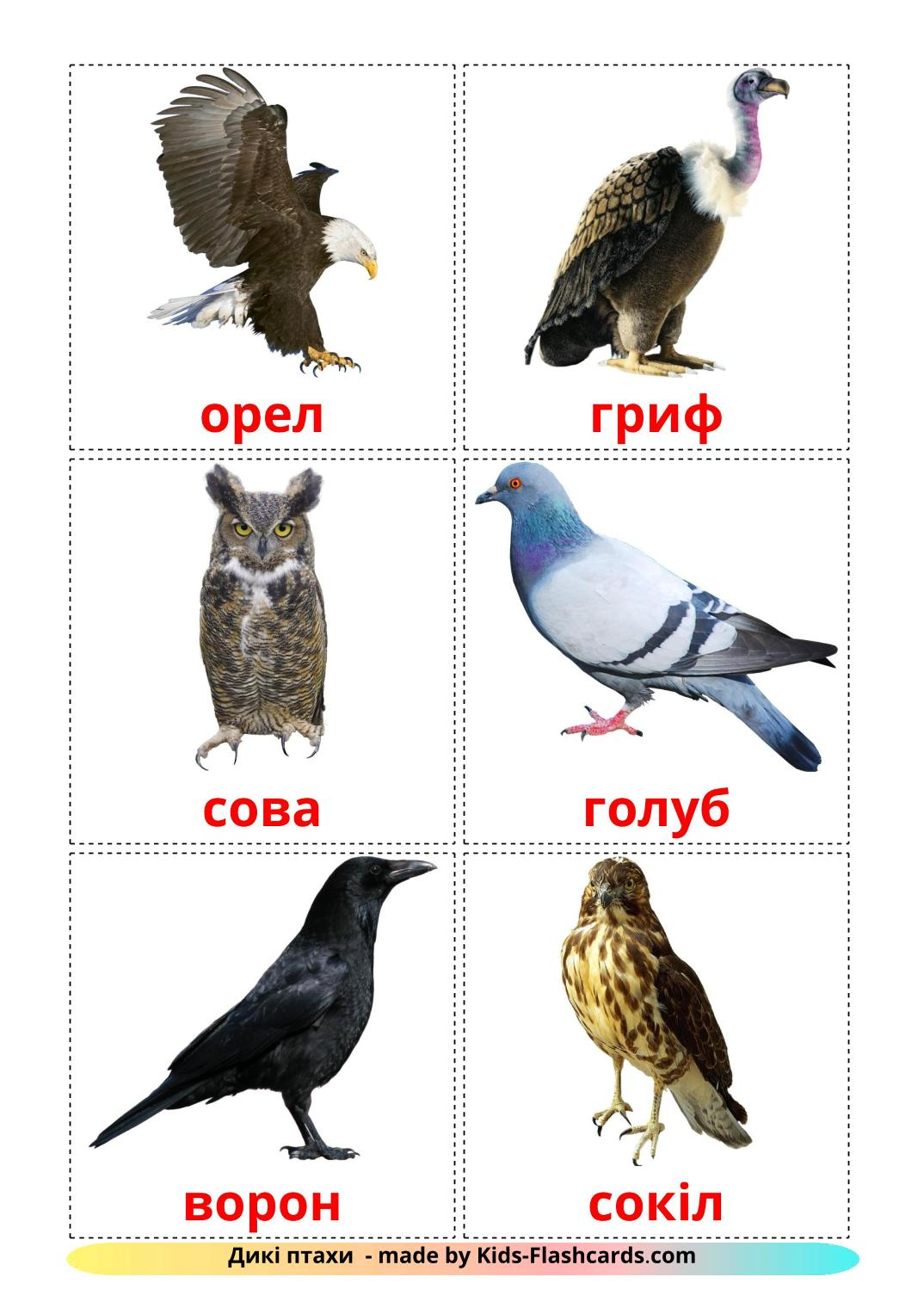 Wild birds - 17 Free Printable ukrainian Flashcards