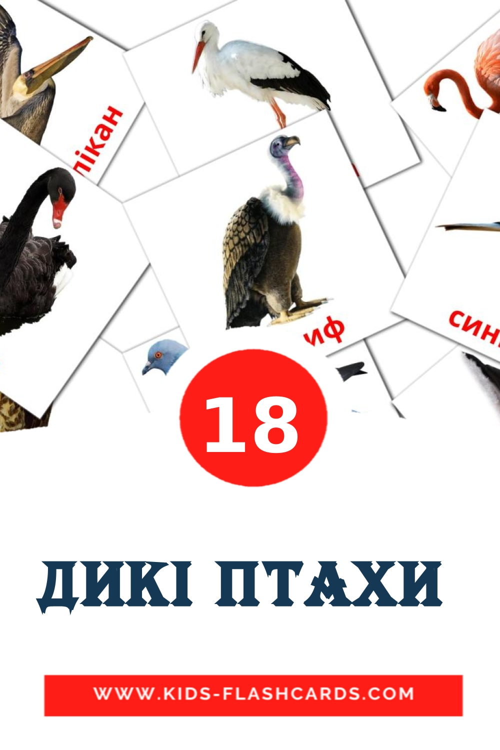 17 Дикі птахи  Picture Cards for Kindergarden in ukrainian
