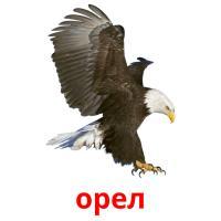 орел карточки энциклопедических знаний