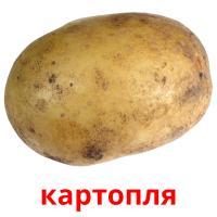картопля picture flashcards