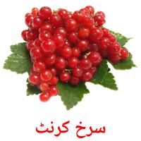 سرخ کرنٹ picture flashcards