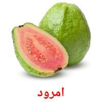 امرود picture flashcards