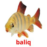 baliq picture flashcards