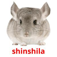 shinshila picture flashcards